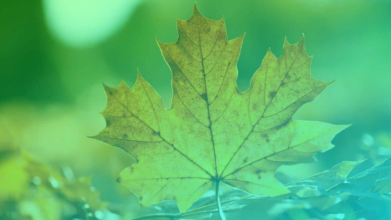 [Outono / Inverno. Como as estações podem modificar sua dieta?]